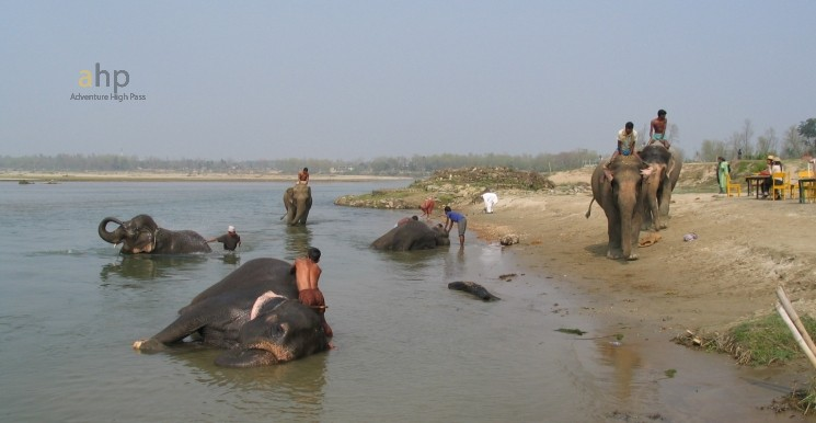 chitwan national park, Elephant bathing